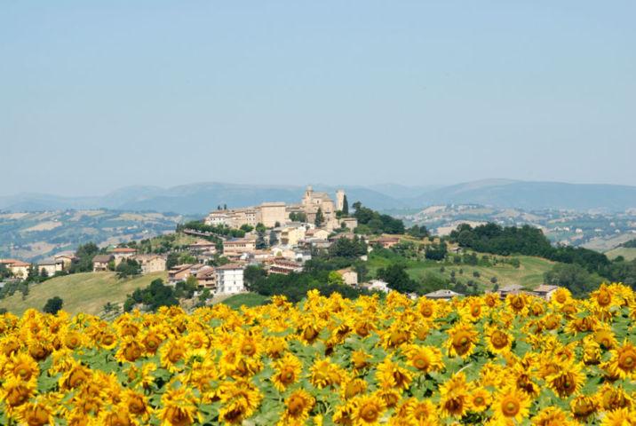 Monte Vidon Corrado con i suoi girasoli e il borgo sullo sfondo