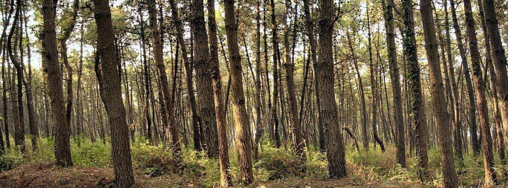 Un bosco ed il suo sottobosco