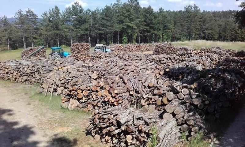 Della legna da ardere