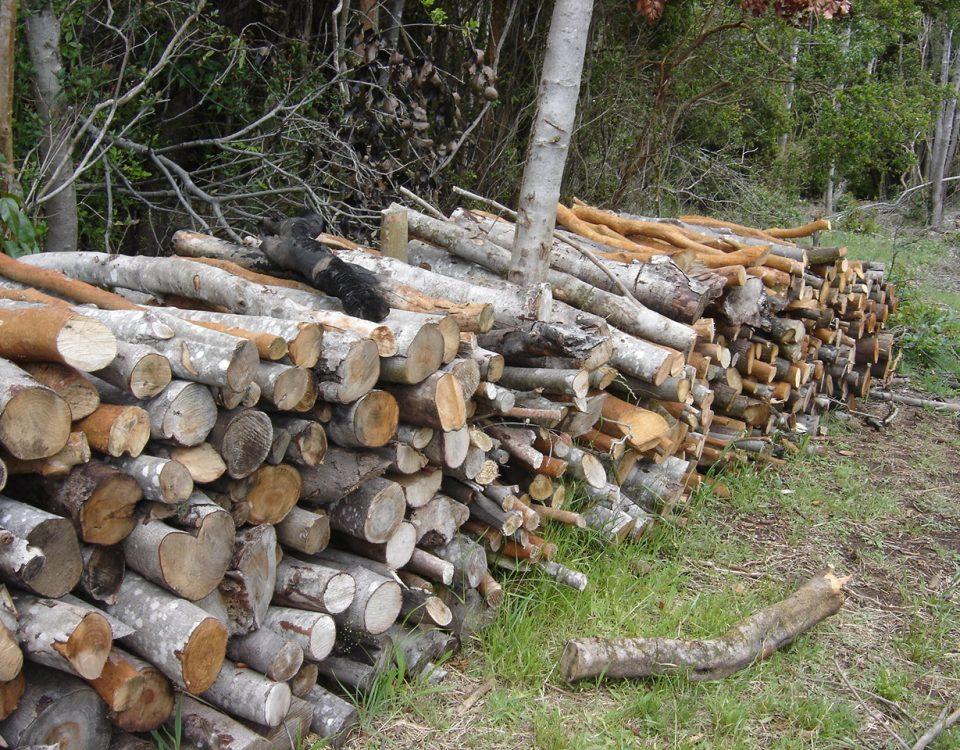 Una catasta di legna da ardere