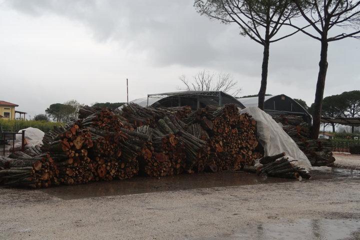 Gli Spazzacamino di Manlio, una catasta di legna