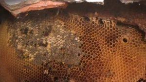 Un nido di api