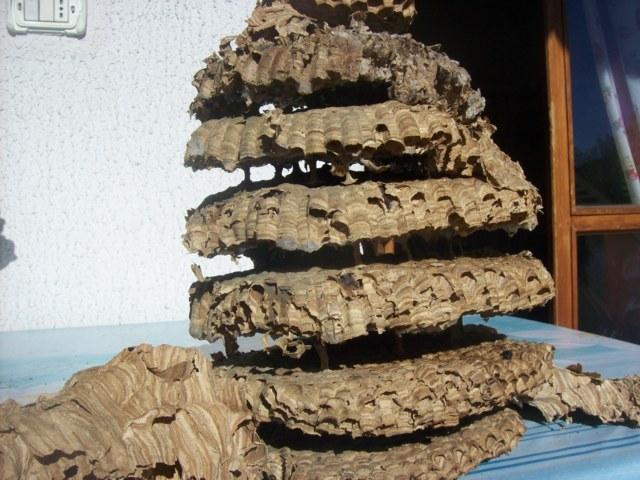 Un nido di calabroni