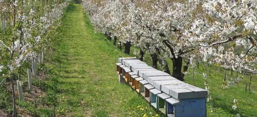 L'ozono in apicoltura